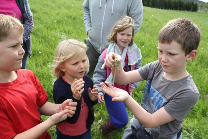 A lizard found en route to the geocache
