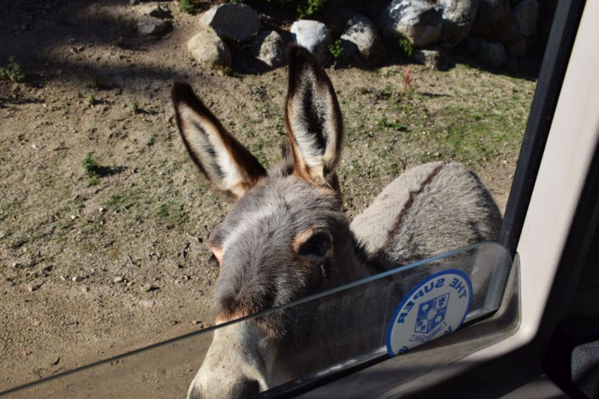 Donkey saying hello